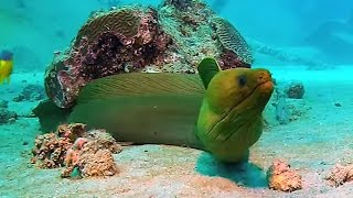 Diving in Aruba was filmed by Oleg Kaplun, in September 2013, with Unique Sports Aruba www.uniquesportsaruba.com/ shot with gopro hero2, light & motion video...