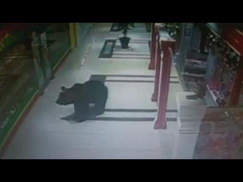 Ρωσία: Αστυνομικοί πυροβόλησαν αρκούδα-εισβολέα σε νηπιαγωγείο