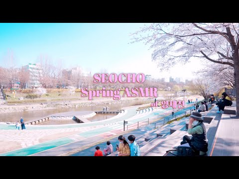 [SEOCHO ASMR] 서초 양재천의 봄 소리를 들려드립니다🎧 Seocho Spring ASMR of 양재천🌸