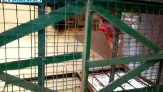 Yadda ake kiwon Zaki a gidan Zoo na Kano