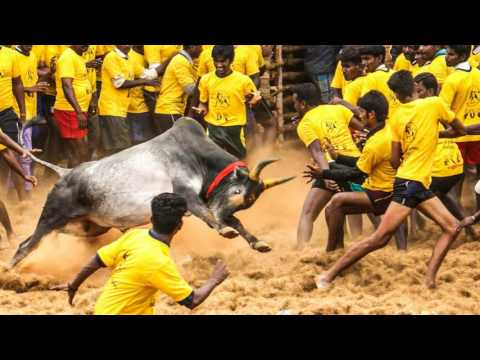 Ram Gopal Varma Sensational Comments on Jallikattu Approval