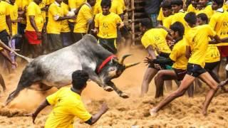 Ram Gopal Varma Sensational Comments on Jallikattu Approval