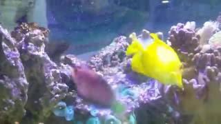 Download Lagu poissons exotiques Mp3