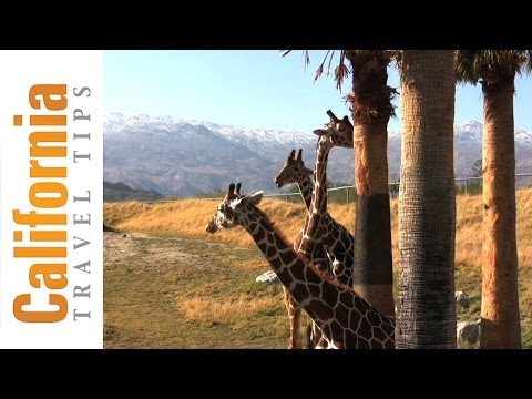 The Living Desert - Palm Springs Attractions