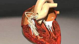 Heartworms a deadly blood parasite