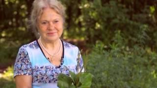 Подорожник та суховершки - рослини