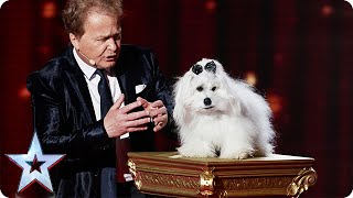 Marc Métral and Miss Wendy wow the crowd   Semi-Final 4   Britain's Got Talent 2015