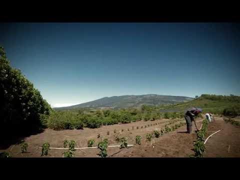 Mi Huerta Trade Market conecta consumidores con productores orgánicos