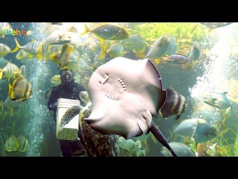 CHo cá ăn tại thủy cung Vinpearl Phú Quốc