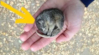 Man That Stumbles Upon A Tiny Creature That's Nearly Frozen Attempts A Wild Scheme To Save It by Did You Know Animals?