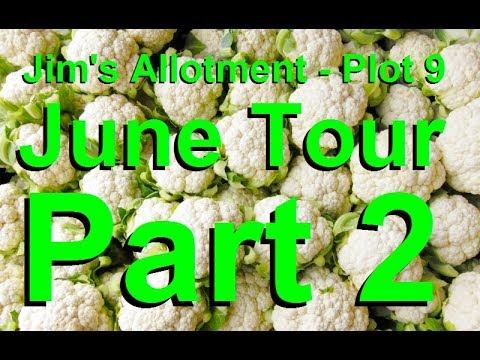 Jim's Allotment - Plot 9 - June Tour Part 2 - Kale Swede Calabrese and Confrey Tea