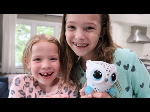 All About our NEW Baby Owl Flying Toy