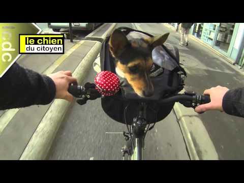 Le sac de vélo pour chien Rixen Kaul ou comment transporter son petit chien dans la ville ?