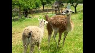 Cavriglia Italy  City new picture : Cavriglia Zoo (AR) Italy