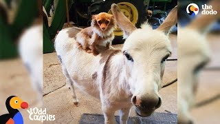 Dog Just Wants His Donkey Friend To Be Happy | The Dodo Odd Couples by The Dodo