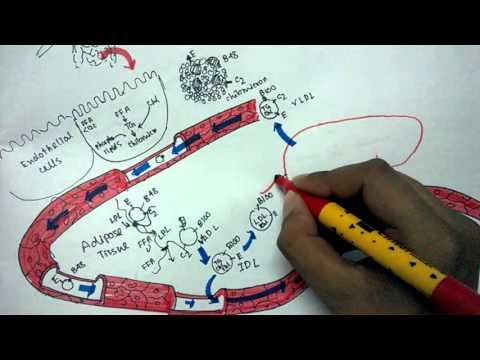 Lipid metabolism and Lipoprotein transport