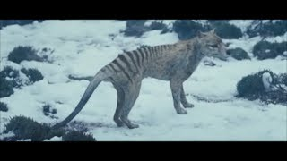 Nonton The Hunter   Tasmanian Tiger Scene  Spoilers  Film Subtitle Indonesia Streaming Movie Download
