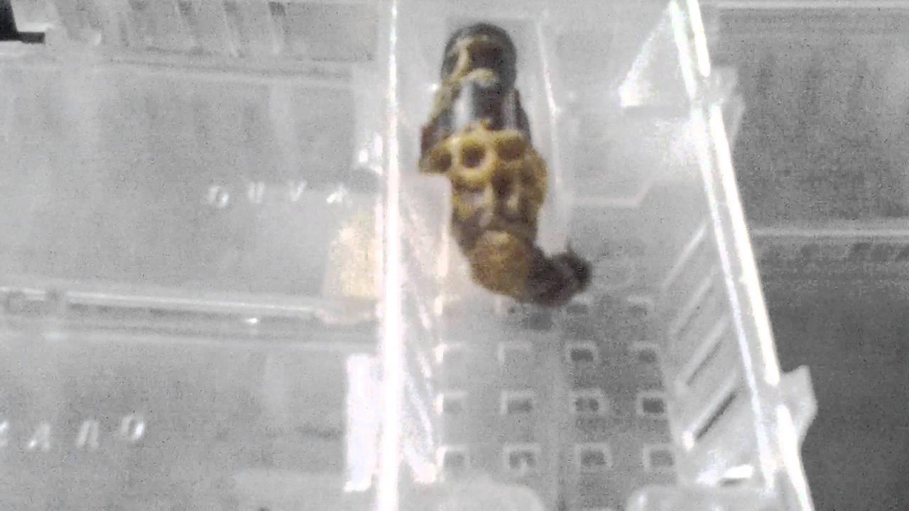Пчеловодство. Смотреть онлайн: Пчеловодство.Выход матки Бакфаст.