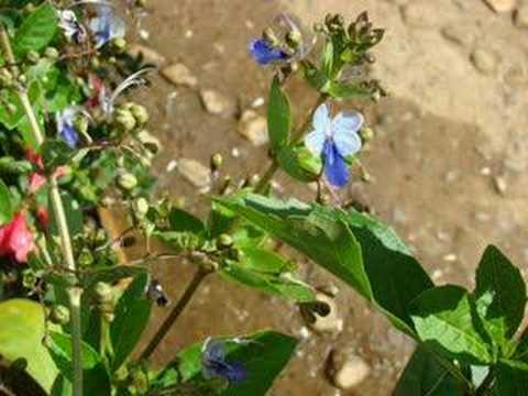 Flores que vi em Monteiro Lobato - SP - Brasil