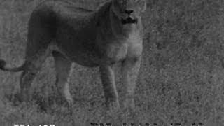 Camera Thrills In Wildest Africa 1946