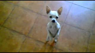 El Willy « Funny Videos, Funny YouTube Videos, Best Videos, Today On 12vid Com