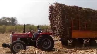 Massey Ferguson 9500  4*4 4wd 58 hp Tractor at Sugarcane Field