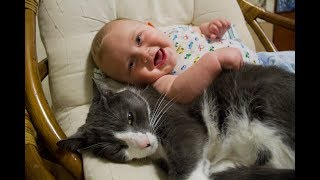 Video Cats Meeting Babies for the First Time Compilation (2015) MP3, 3GP, MP4, WEBM, AVI, FLV Maret 2018