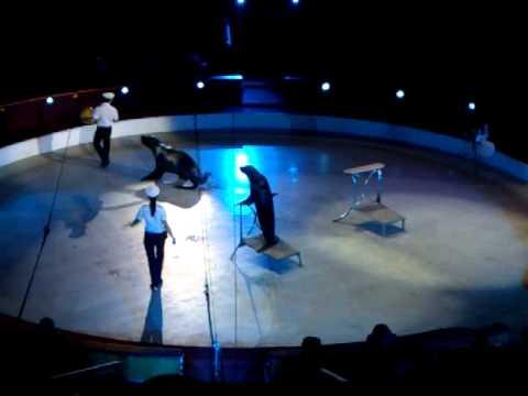 Cirkusz – Fókák
