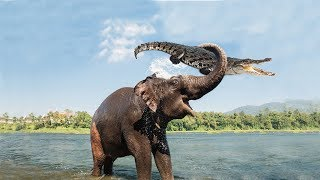 Video Amazing Mother Elephant Defeated Crocodile To Save Her Baby | Animals Save Animals MP3, 3GP, MP4, WEBM, AVI, FLV April 2018