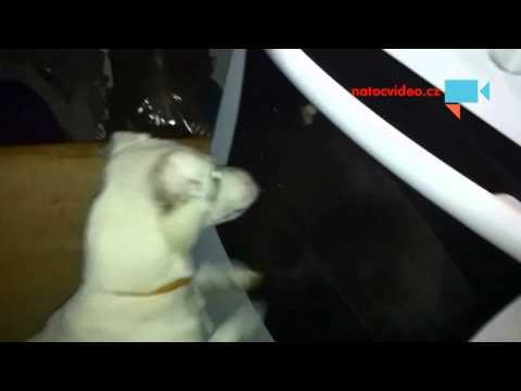 pes si hraje s můrou