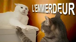 Video L'EMMERDEUR - PAROLE DE CHAT MP3, 3GP, MP4, WEBM, AVI, FLV Mei 2018