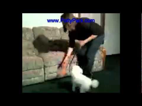 Potty Park Adult Dog Training