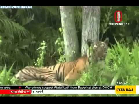 Tigers number 106 in Sundarbans: Census (29-07-2015)