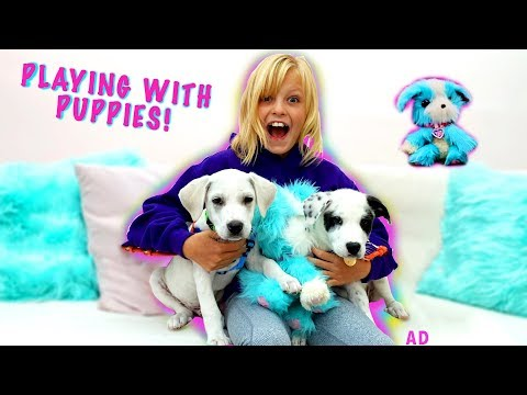 Payton Plays with Puppies! Scruff-a-Luvs