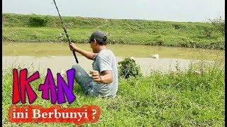 Download Video Mancing Ikan  Di Air Yang Keruh,Mantap !!! MP3 3GP MP4