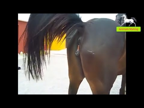 World Wildlife - Horse species mating season 1 | Wonderful farm