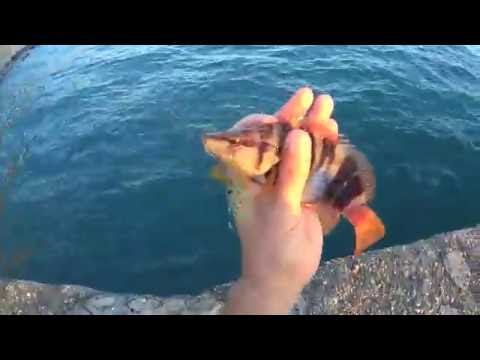 рыбалка сочи ютуб