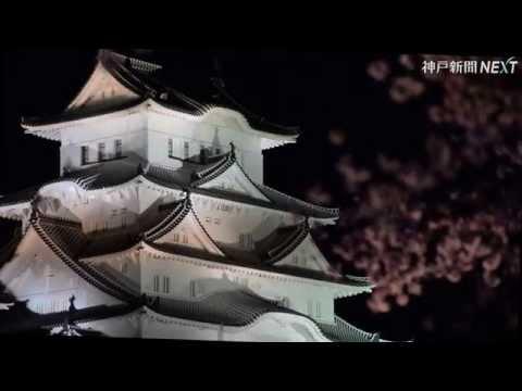 姫路城がライトアップの夜桜と競演
