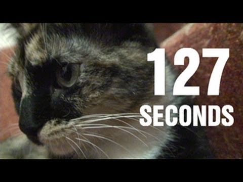 127 Secondes : Le remake de 127 Heures (avec un chat)