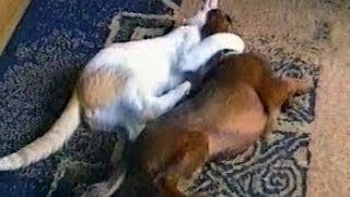 Funny Animals Compilation: Best of May 2012