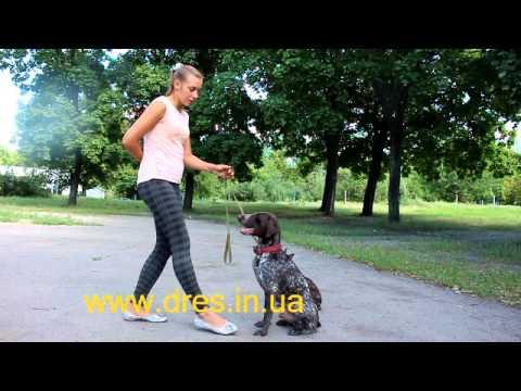 Смотреть онлайн: Основы дрессировки! Обучение собаки Сидеть Ждать