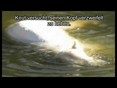 Knut Mort (видео)