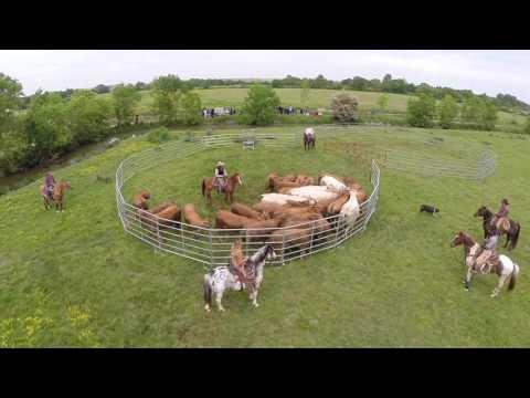 Download wsf: rassemblement et tri de bétail MP3