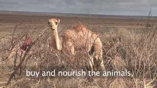 Ethiopian Pastoralists Adapt To Climate Change