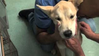 Emaciated Dog Malabsorption vs. Maldigestion