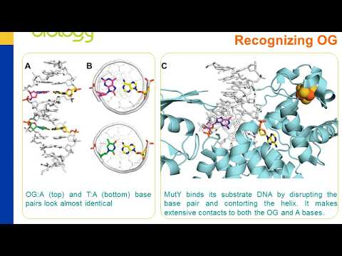 ACS Chemical Biology LiveSlides: SAR's Reveal Key Features of 8-Oxoguanine...