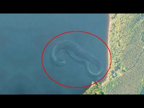 Video 7 Mysterious Deep Sea Creatures Spotted On Google Earth download in MP3, 3GP, MP4, WEBM, AVI, FLV January 2017