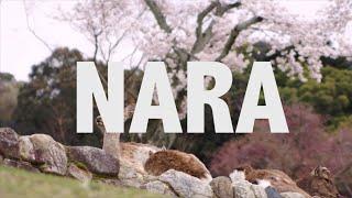 Nara Japan  city photos gallery : JAPAN IS AWESOME -- NARA