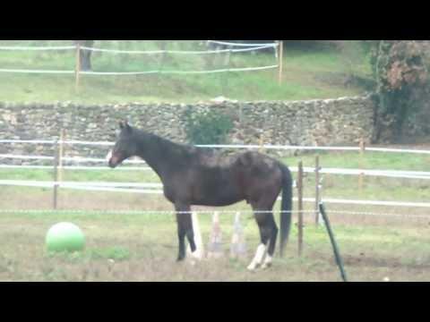 Une journée à la ferme avec nos chevaux