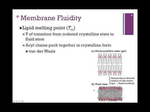 054-Lipid Bilayer & Membrane Fluidity